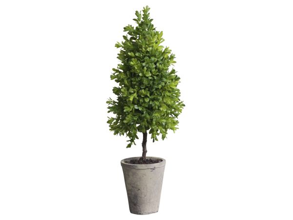 Buchsbaum Kegel klein in Topf 2er Set von Chic Antique