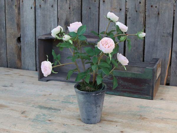 Rose in altem Keramiktopf von Chic Antique