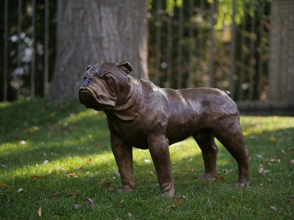 Bronzefigur Englische Bulldogge