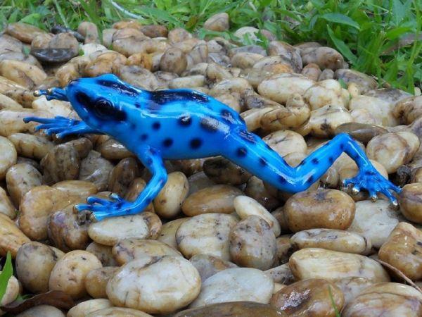 Bronzefigur Regenwaldfrosch Blau