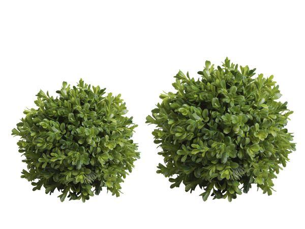 Buchsbaum Kugel 2er Set von Chic Antique