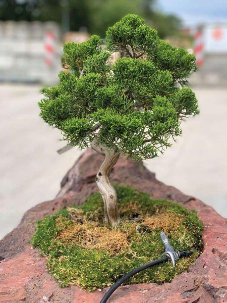 Bonsai-Minigarten Kategorie 3 Granitpalisade von Naturstein Geukes