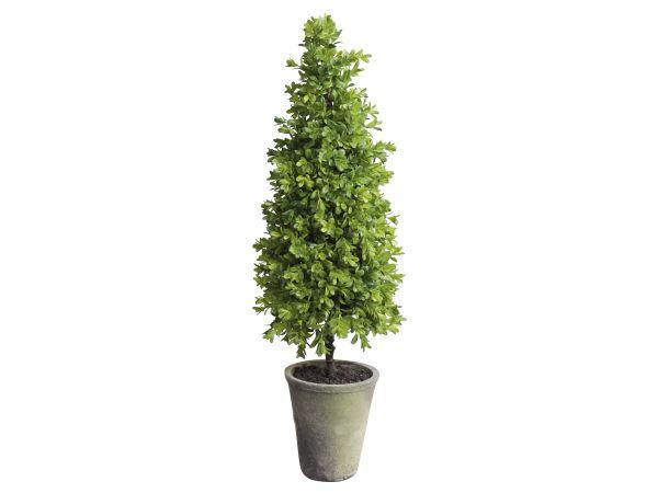 Buchsbaum Kegel groß in Topf 2er Set von Chic Antique